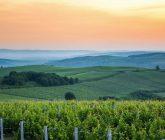 """O nouă ediție a campaniei """"Must de la Jidvei"""" vine în sprijinul micilor producători de vin. Prețul unui kg de must de este de 4,5 lei"""