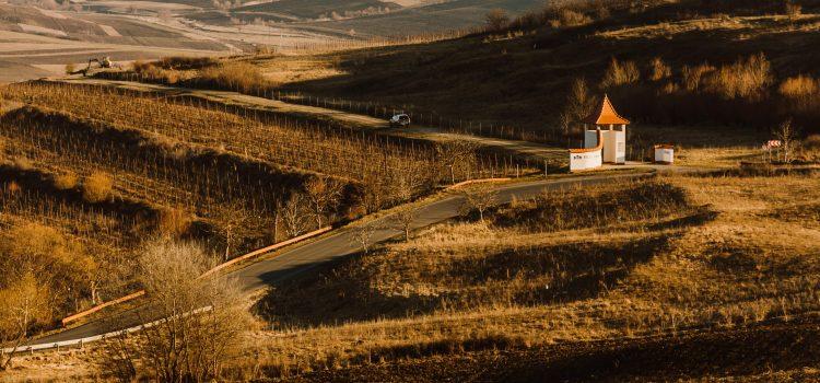 Villa Vinèa se concentrează pe gama Selection și pe creșterea turismului enologic