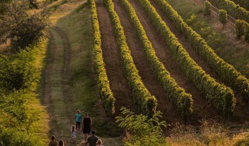 Tururi oenologice la cramele din România – experiențe cu degustări, vizitarea unor atracții turistice, artă și povești