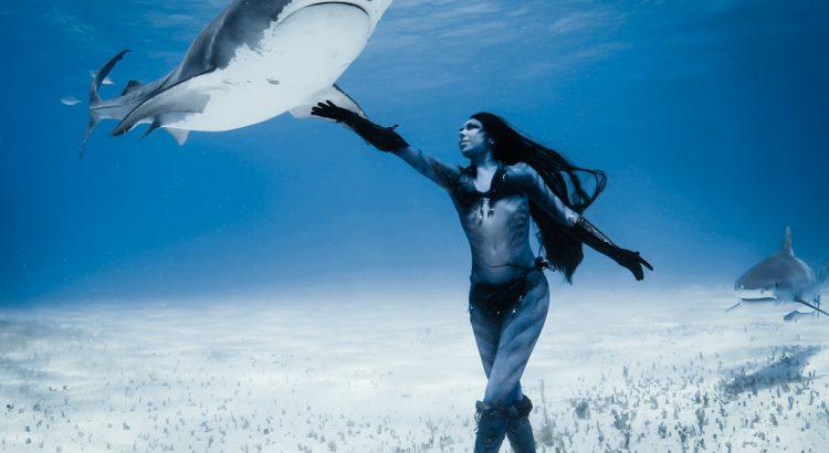 Cartilajul de rechin – supliment la modă, eficient sau marketing?